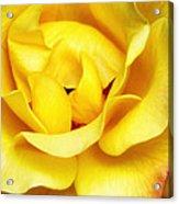 Yellow Sapphire Rose Palm Springs Acrylic Print