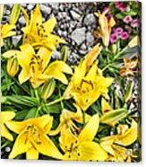 Yellow Spring Acrylic Print