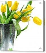 Yellow Spring Tulips Acrylic Print by Sandra Cunningham