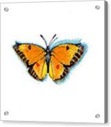 Yellow Sulphur Acrylic Print