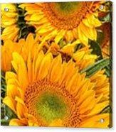 Yellow Sun Flower Burst Acrylic Print
