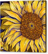 Yellow Sunflower Acrylic Print by Diane Ferron