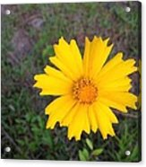 Yellow Sunshine Acrylic Print