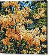 Yellow Too Acrylic Print