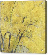 Yellow Trees Acrylic Print