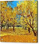 Yellow Trees Acrylic Print