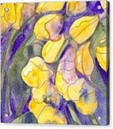 Yellow Tulips 3 Acrylic Print
