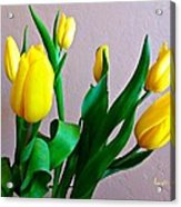 Yellow Tulips Acrylic Print