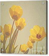 Yellow Tulips Acrylic Print by Diana Kraleva