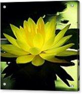 Yellow Waterlily Nc Acrylic Print