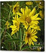 Yellow Wild Flowers Acrylic Print