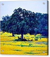 Yellow Wildflowers After Sunrise Acrylic Print