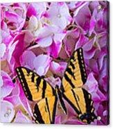 Yellow Wings Acrylic Print