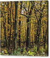 Yellow Woods On A Rainy Day Acrylic Print