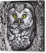 Yelloweyes - The Owl Edition Acrylic Print