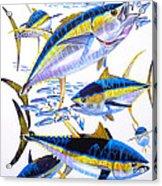 Yellowfin Run Acrylic Print