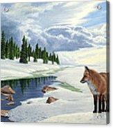 Yellowstone Fox Acrylic Print