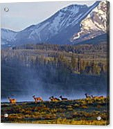 Yellowstone Morning Acrylic Print