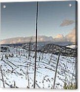 Yellowstone Morning Acrylic Print by David Yack