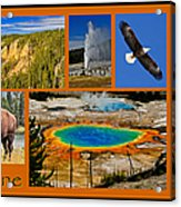 Yellowstone National Park Acrylic Print