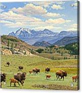 Yellowstone Spring Acrylic Print