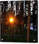 Yellowstone - Sunset Through The Trees Acrylic Print