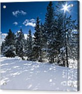 Yellowstone Sunshine Acrylic Print