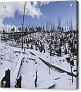 Yellowstone Winter Acrylic Print by David Yack