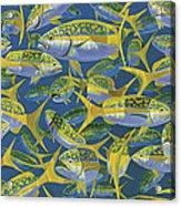 Yellowtail Frenzy In0023 Acrylic Print
