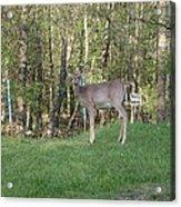 Yes Deer Acrylic Print