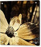 Yesterday's Flower Acrylic Print