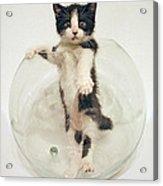 Yin Yang Kitten Acrylic Print