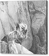 Yorkie Dog On A Cliff Pencil Portrait Acrylic Print