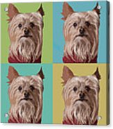 Yorkie Times Four Acrylic Print