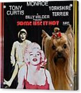 Yorkshire Terrier Art Canvas Print - Some Like It Hot Movie Poster Acrylic Print
