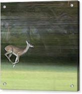 You Better Run Through The Jungle Acrylic Print by Hazel Billingsley