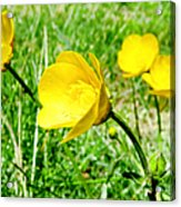 You Like Butter Acrylic Print