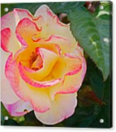 You Love The Roses - So Do I Acrylic Print by Christine Till