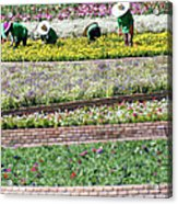 You Reap What You Sow Acrylic Print