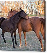 You Scratch My Back And I'll Scratch Yours Acrylic Print