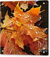 You Waited For Me To Fall Acrylic Print by Catherine Reusch Daley