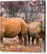 You Watch My Back And I Will Do The Same For You Acrylic Print