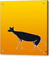 Young Antelope Acrylic Print