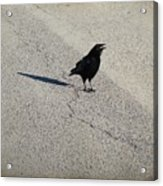Young Cawing Crow Acrylic Print