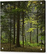 Young Forest Acrylic Print