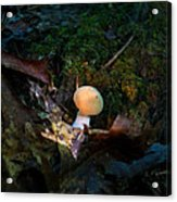 Young Lonely Mushroom 2 Acrylic Print