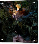 Young Lonely Mushroom Acrylic Print