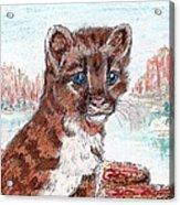 Young Mountain Lion Acrylic Print