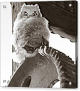 Young Owl On Wheel Acrylic Print