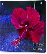 Young Passion... Acrylic Print